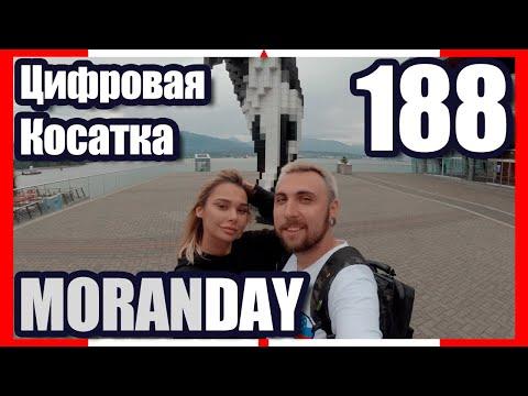 🇨🇦 Moran Day 188 — Цифровая Косатка