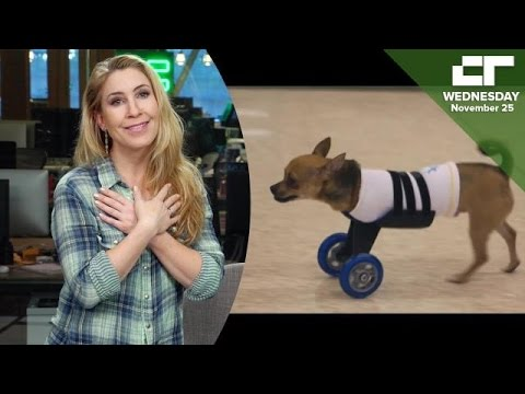 Pawsthetics Is 3D Printed Parts for Pets   Crunch Report