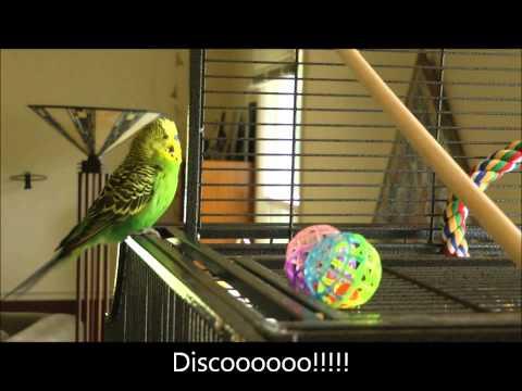 Ten ptak zna angielski lepiej od ciebie!