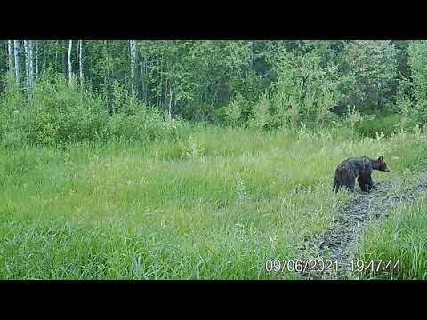 Медведь в Койгородском