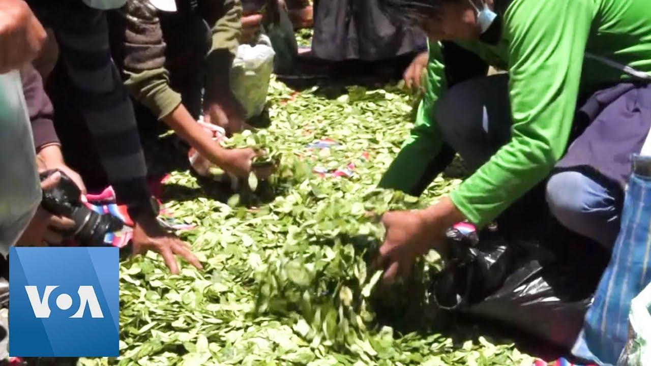 Bolivia Coca Leaf Farmers Share Crops in Plaza