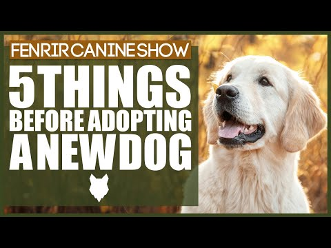 5 Things To Think About Before ADOPTING A DOG