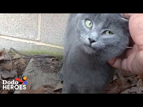 Guy Who Didn't Like Cats Can't Stop Rescuing Them Now   The Dodo Heroes