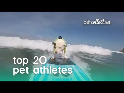 Best Pets of the Year: Top 20 Pet Athletes | The Pet Collective - UCPIvT-zcQl2H0vabdXJGcpg
