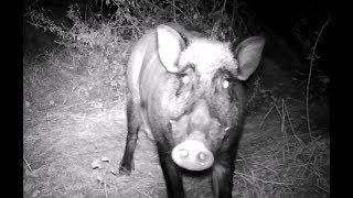 Vidéos nocturnes