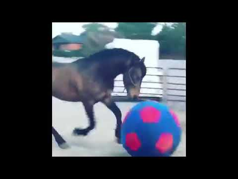 Cute Horses cought on camera👍👍👍