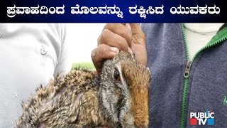 Youths Rescue A Rabbit From Floods In Chikkodi