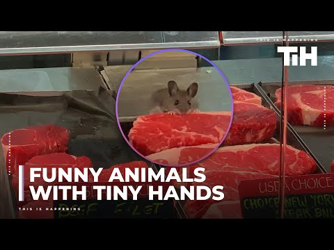 Funny Animals With Tiny Hands