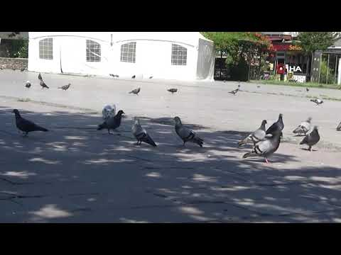 Sokaklar Güvercin ve Sokak Hayvanlarına Kaldı..