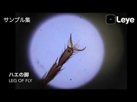 The Microscopic World with L-eye / Leyeサンプル集