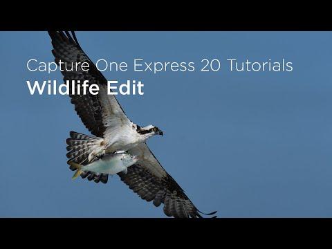Capture One Express 20 Tutorials   Wildlife edit