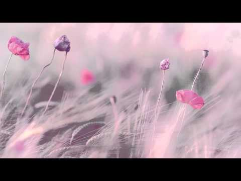 """3 HOURS Best Relaxing Music 'Romantic Piano"""" Background Music for Stress Relief, Therapy, Love - UCb_kshGodseYhLPcDtxWv5w"""