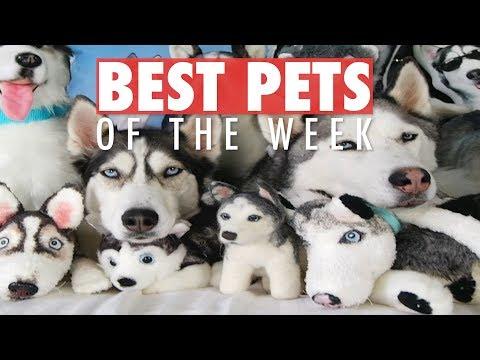 Best Pets of the Week | June 2018 Week 1 - UCPIvT-zcQl2H0vabdXJGcpg
