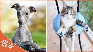 Playful  Animals 👀Funny And Cute Cat  (2019) Funny Pet Videos
