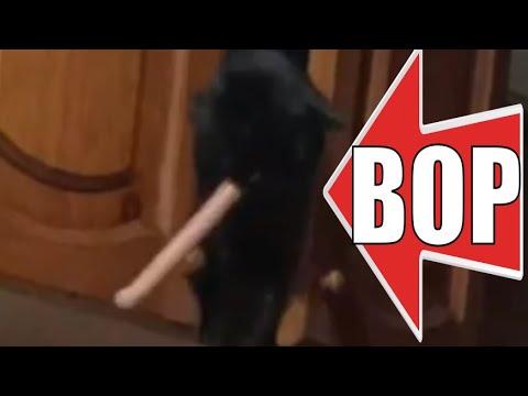 Кот ворует сосиску смешные животные / Cat steals sausage funny animals - UCbyp8UEf5Jct4CkfcrqcSOQ