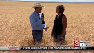 Montana Ag Network: Winter wheat harvest underway for MT farmers