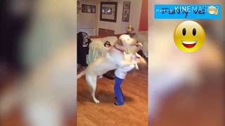 Funniest Dogs Fails Like funny vids