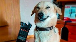 ? Funniest ? Dogs And ?Cats - Try Not To Laugh - Funny Pet Animals' Life ?