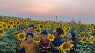 Beautiful Sunflower Gardens In Chandigarh | Our Visit To Beautiful Sunflowers Garden In Punjab