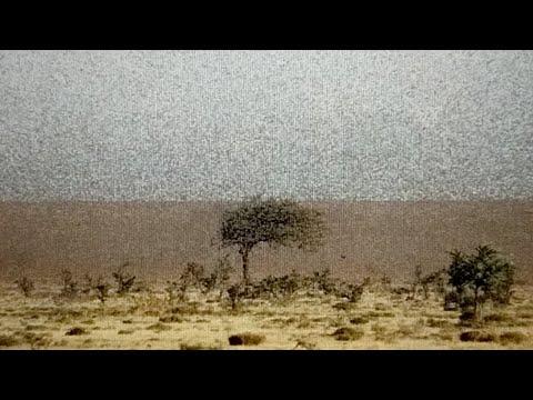 Lake Tahoe Earthquake Swarm Lebanon Locust Swarms