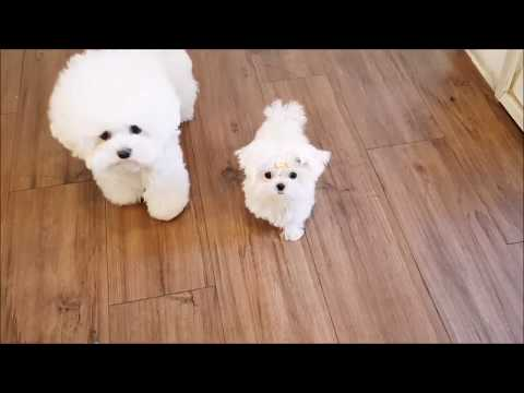 cutest puppies ever in the world - the most cutest puppies on earth