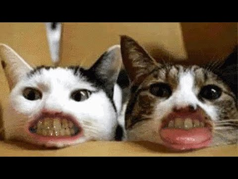 Funny 😹 Cats And 🐶 Dogs Situations - Try Not To Laugh 😂 - UC09IvZwjpunzrdHH1EHok-w