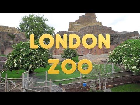 London 28 - ZSL London Zoo - UC-k_zEzIup5tAmwNQtejtXg