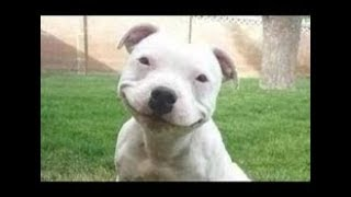 FUNNY DOG COMPILATION FIRST VIDEO