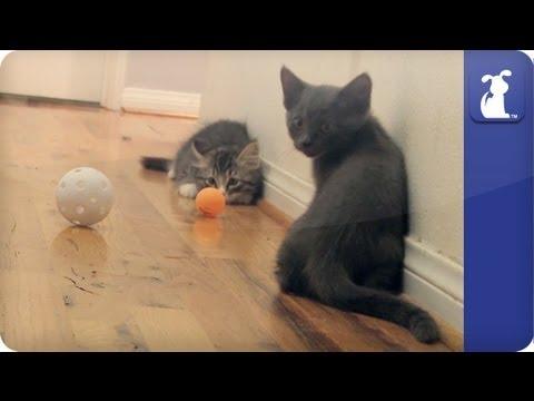 Khloe Kardashian Odom - Kittens play some crazy soccer  - The Litter Episode 17 - UCPIvT-zcQl2H0vabdXJGcpg