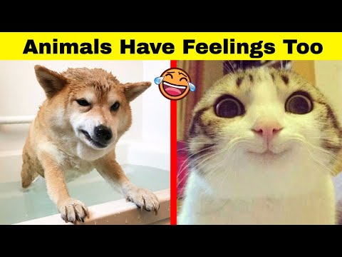 Hilarious Animals Who Simply Can't Hide Their Emotions - UCWv2oOr-VnM5z7-Eb_NlWfA