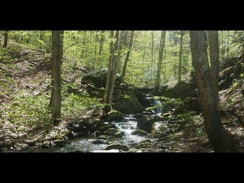Scrag Mountain Forest Gateway Dedication