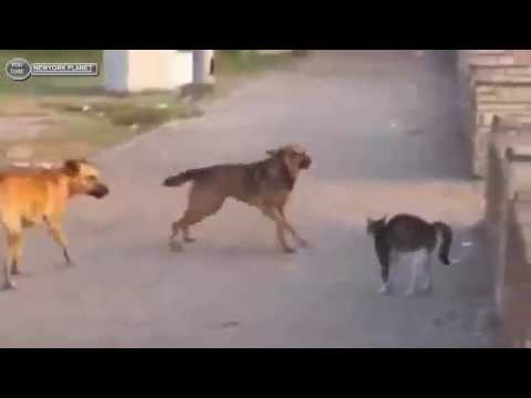 Dogs scared from cats funny moment !!! Funniest dog vs cat compilation 2019