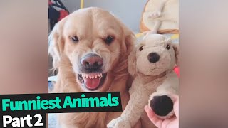 Ultimate Funny Animals Compilation   Funniest Animal Videos 2019 (Part 2)