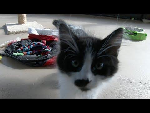 Lots Of Cute Kittens!! - UCcftblae5aEnraa34d1FPQg