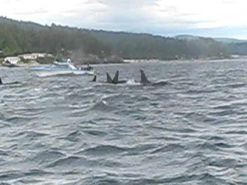 Salmon Fishing Turns Into Whale Watching
