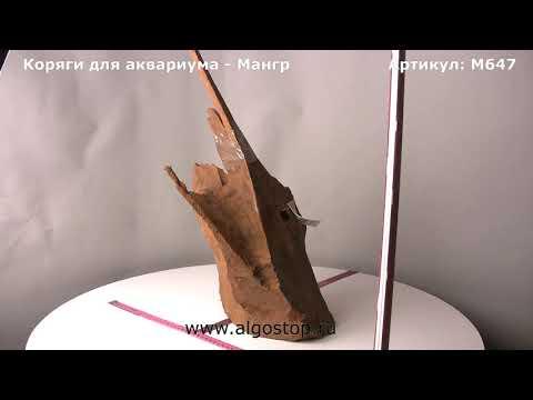 Коряга для аквариума натуральная мангровая до 60 см
