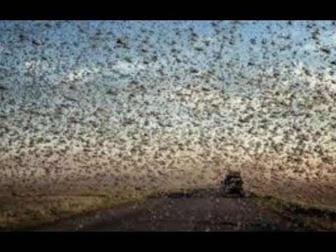 Prophecy Alert: Apocalyptic Hail, Locust In Egypt, 3rd Temple End Of The World