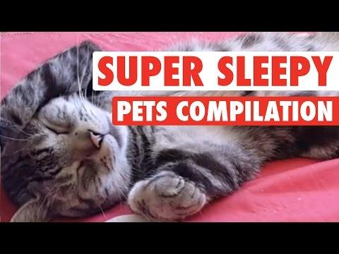 Super Sleepy Pets || Pets Sleeping Compilation - UCPIvT-zcQl2H0vabdXJGcpg