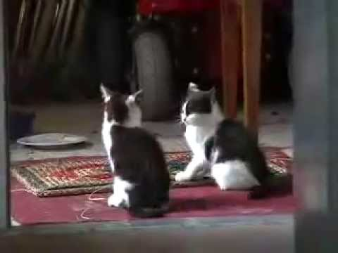 comedy: funny cute kittens having fun playing - UC64zLk2zA_zEbJ8FRrBA5Sg