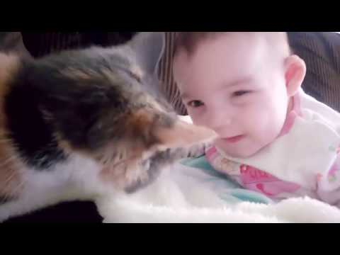 Funny Baby Video Baby and Cat Fun and Fails