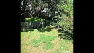 New Orleans man creates Saints yard art