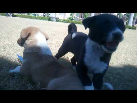funny puppies - UC-yYvA_QB7EsRpvLqdDDUZA