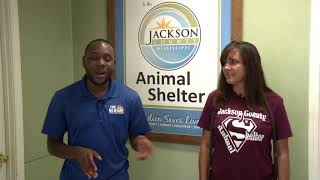 In Your Shoes with Jaylon Morris - Jackson County Animal Shelter