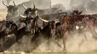 'This is one of the least loved bull markets': Alfred Eskandar