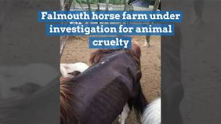 Falmouth horse farm under investigation for animal cruelty