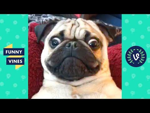 TRY NOT TO LAUGH - Funny Dogs - UCd07rKJ7Q0pg5ths7Pz8k8Q