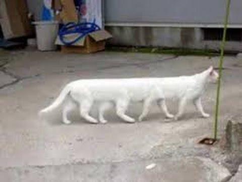 Funny kitten videos | Funny kittens videos | Funny cat videos | Funny cats videos - UCgrh1OFtDAODb4z37-SIZ7g