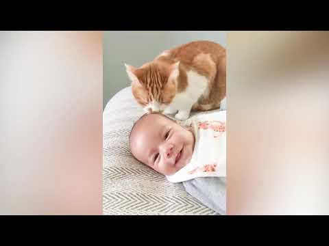 Cute Baby and Cats Playing Together   Baby and Pet Video