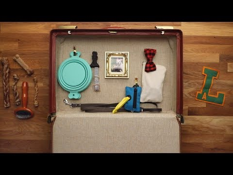Doggy Road Trip Bag In 15 Minutes or Less // Presented by BuzzFeed & GEICO
