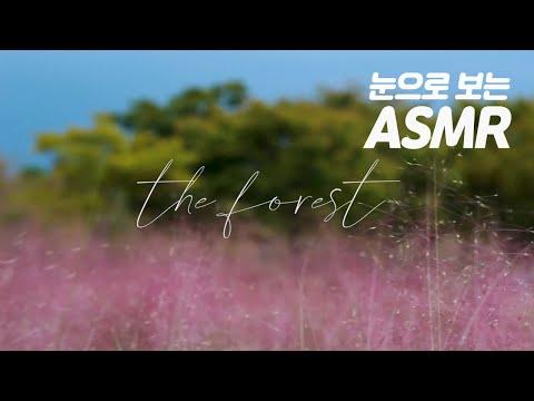 [#일상 숲 : 무자극 힐링] 핑크빛 바다같은 을숙도의 핑크뮬리
